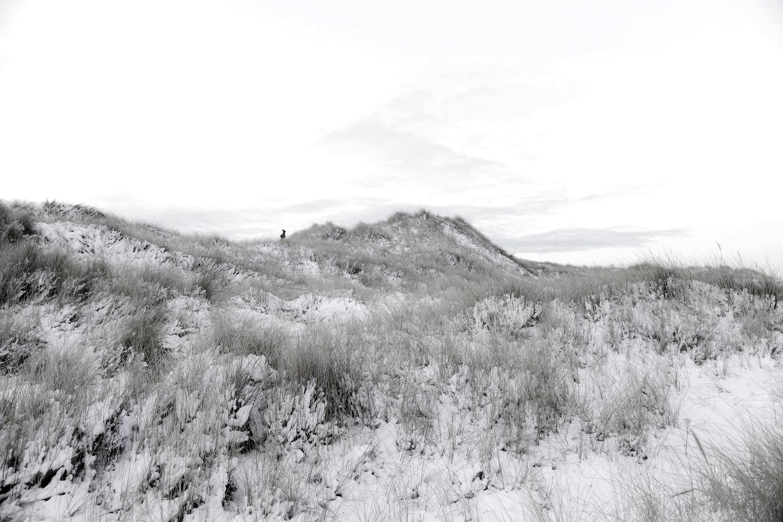 Naturfotografi - 17.-19. desember 2017 - fotografkallen.com