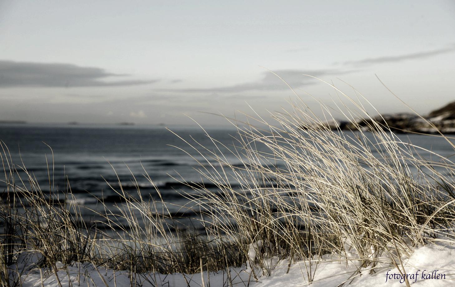 Naturfotografi 4. desember 2017 - fotografkallen.com